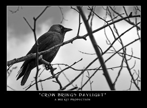 Crow Brings Daylight