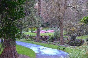 Botanic Gardens in the rain